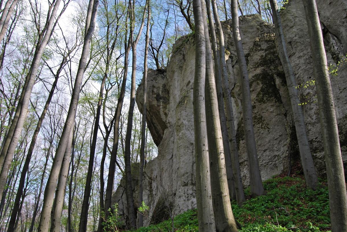 Rezerwat Pazurek - krótki wypad na Jurę
